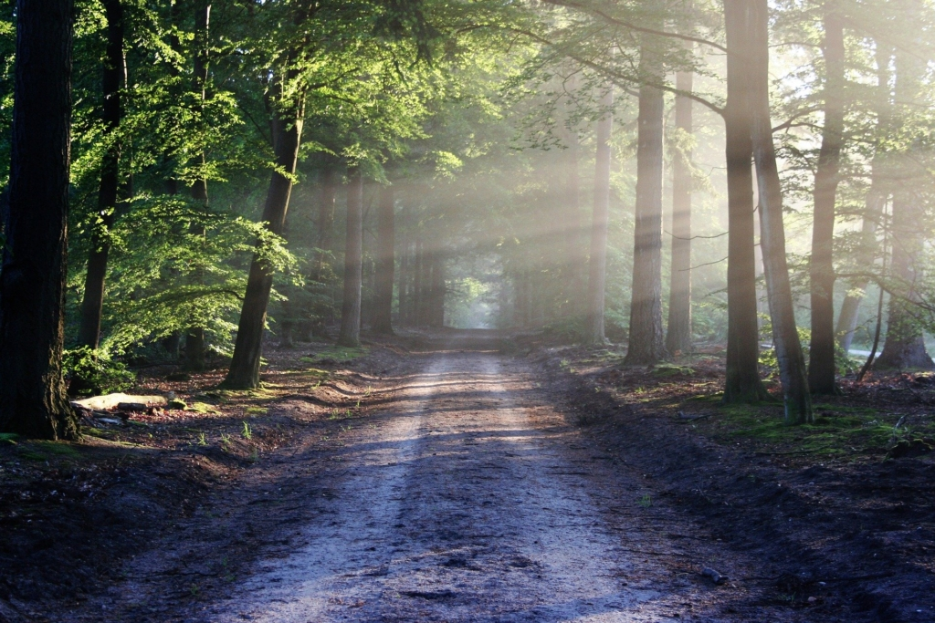 image of dirt road with trees and sunlight shining through